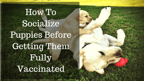 How To Safely Socialize Puppies Before Getting All Their Shots