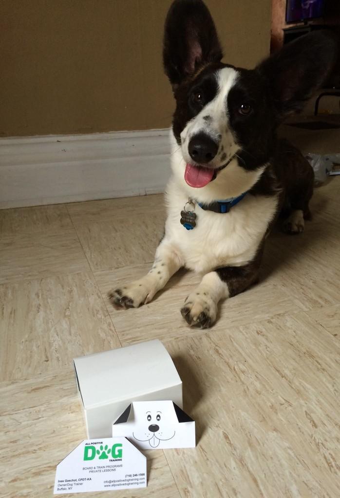 Creative Dog Training Business Card Ideas - The Modern Dog Trainer