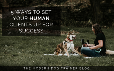 Blog - The Modern Dog Trainer